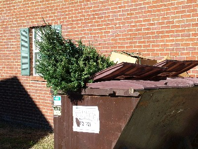 tree in a dumpster