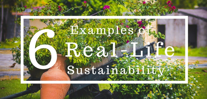 6 Examples Of Real Life Sustainability Budget Dumpster