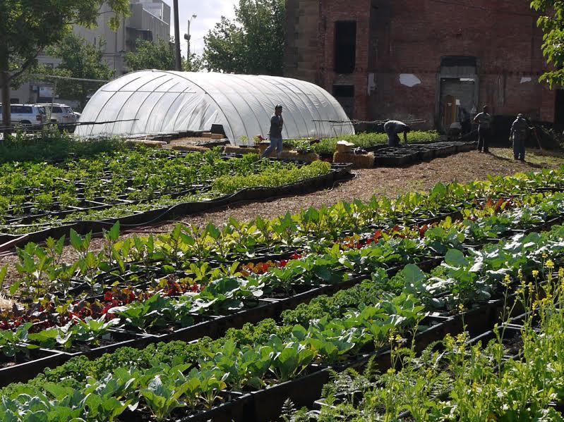 LPCCD urban farm