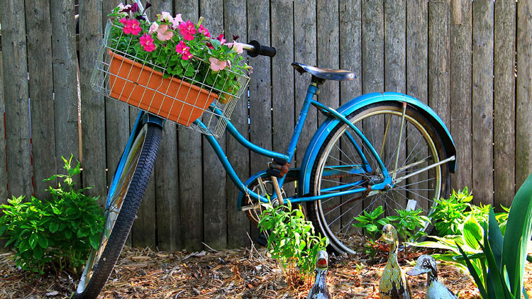 bicycle-garden