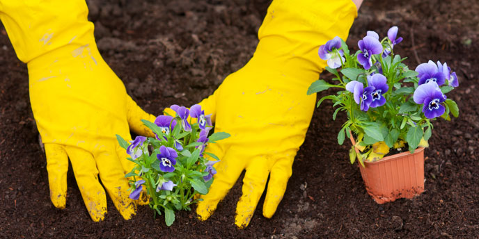 Flower Planting for Community Cleanup