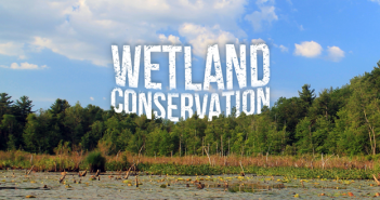 Wetland-Conservation-Cover-Photo