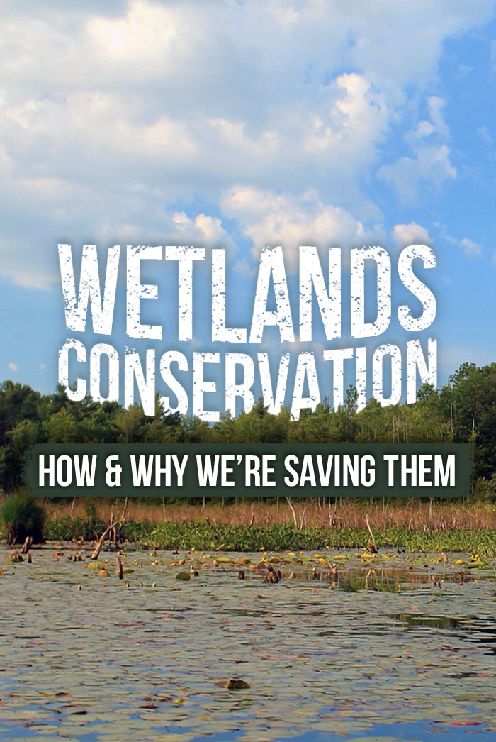 Wetland-Conservation