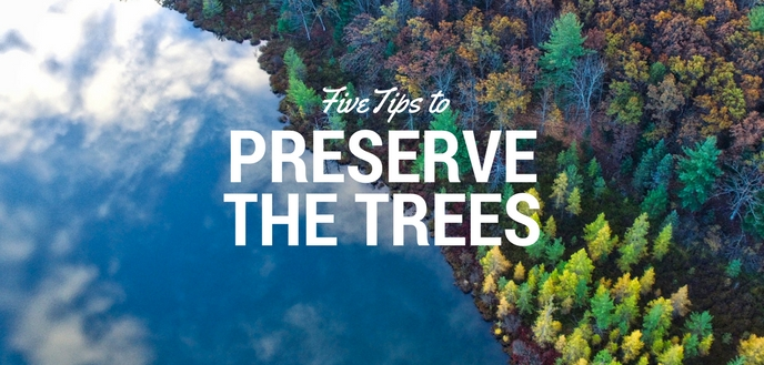 Tree Preservation Tips
