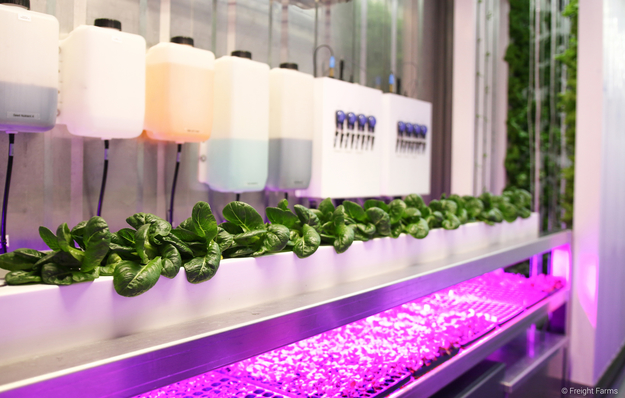 Urban farming inside a recycled shipping container.
