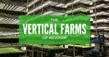 aerofarms vertical farms