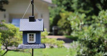 DIY Backyard Privacy Ideas.