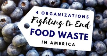 Organizations Fighting Food Waste in America