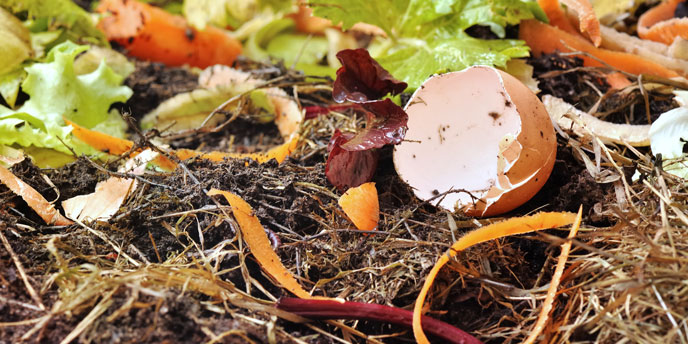 Compost for Sustainable Gardening