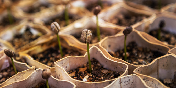 Start Seedlings in Recycled Cardboard