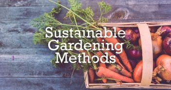 Sustainable Gardening Tips