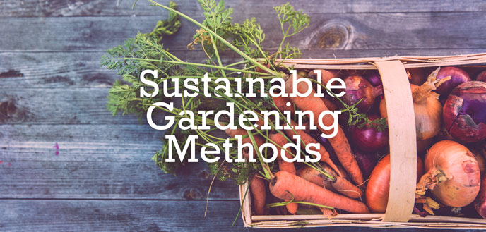 Sustainable Gardening Tips