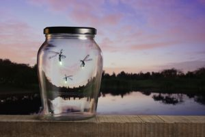 Reusing a Glass Jar as a Lightning Bug Catcher.