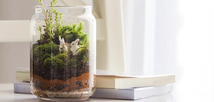 How to Create and Grow Your Own Bottle Garden
