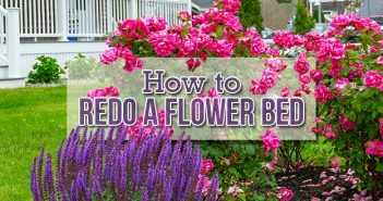 How to Redo a Flower Bed