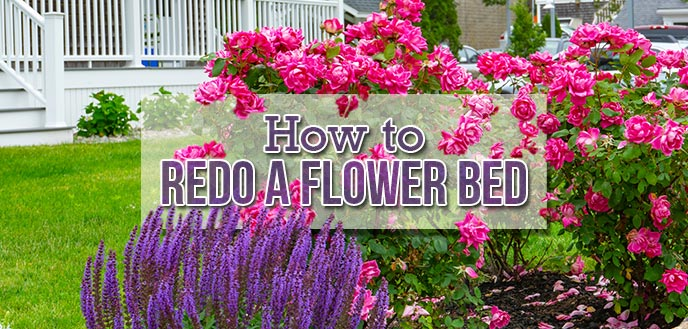 How To Redo An Existing Flower Bed Budget Dumpster