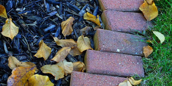 Spreading mulch on your yard is one fall yard care tip that will keep your plants healthy during the winter.