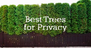 Choosing the Best Trees for Privacy