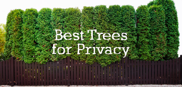 How To Choose The Best Trees For Privacy Budget Dumpster