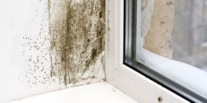 Closeup on Mold in Corner of Window Frame
