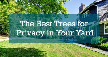 The Best Trees for Privacy in Your Yard