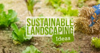 6 Sustainable Landscaping Ideas for a Greener Yard