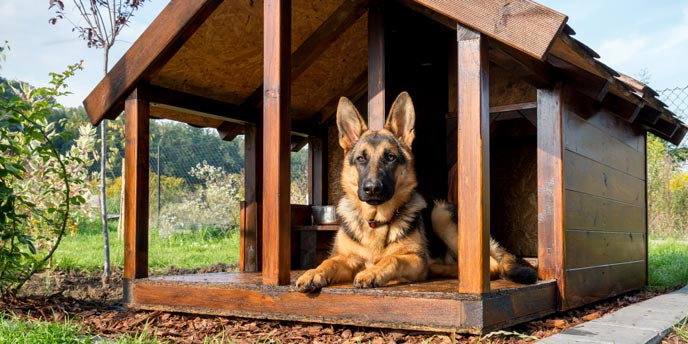 Dog-Friendly Backyard Landscaping Ideas | Budget Dumpster