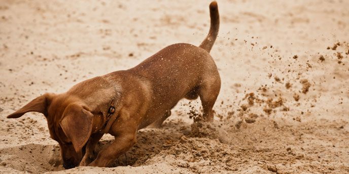 Dog-Friendly Backyard Landscaping Ideas | Budget Dumpster