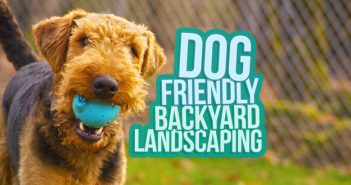 Dog Friendly Backyard Landscaping Ideas