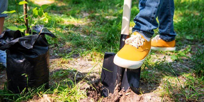 Digging a Tree Planting Hole Using a Shovel