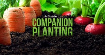 What is Companion Planting? A Guide for Beginners