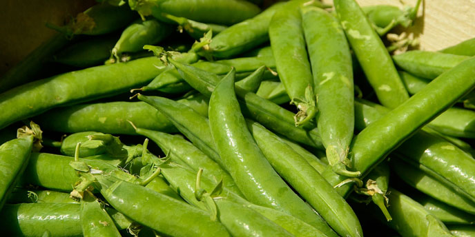 Freshly Picked Pea Pods in Wooden Box