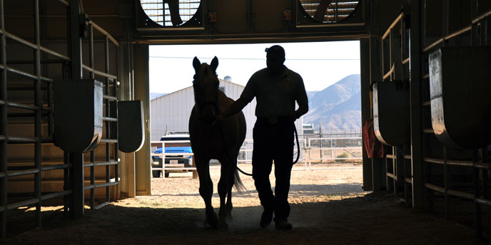Silhouette of Horse and Owner Walking Through Barn