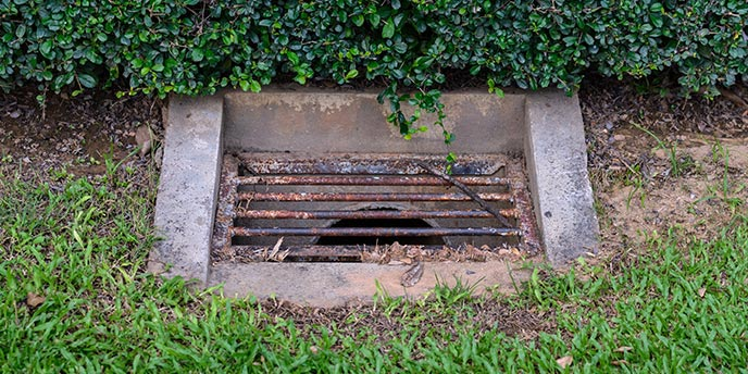 Drainage Grate With Metal Grate Dug Into Soil Near Grass and Hedge Line