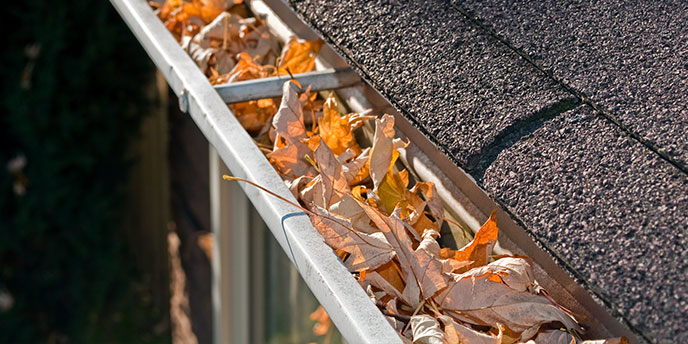 Leaves Stuck in Rain Gutter